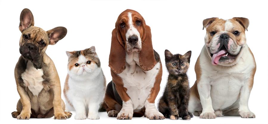Resultado de imagen para mascotas png